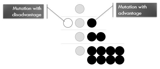 Advantageous-Mutation-Over-Generations