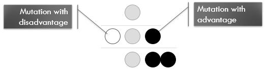 Second-Generation-After-Mutation