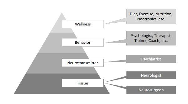 4-layers-of-neuroscience-pyramid